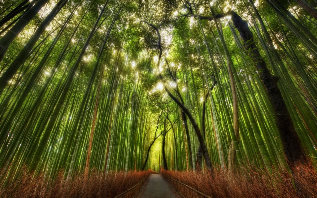 El Roble y el Bambú