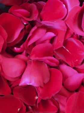 Ba os para atraer el amor ricardolatouchetarot - Banos para el amor ...