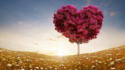 love, amor, familia, hijos, padres, amigos, amantes, matrimonio, novios, pareja